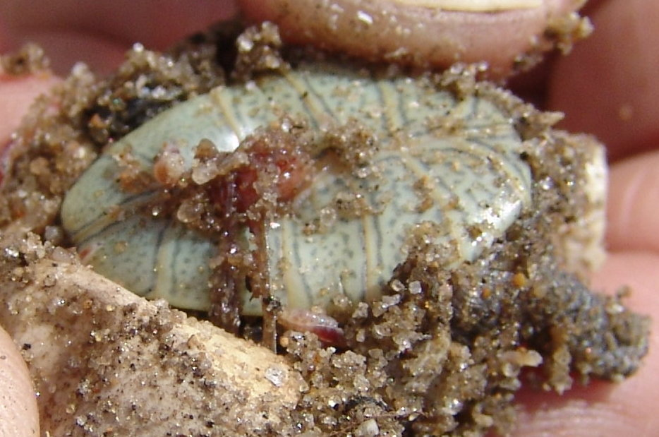 maggots in breast - photo #43