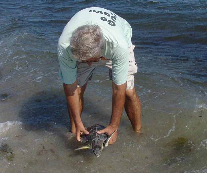 Cape Cod Bay « Turtle Journal