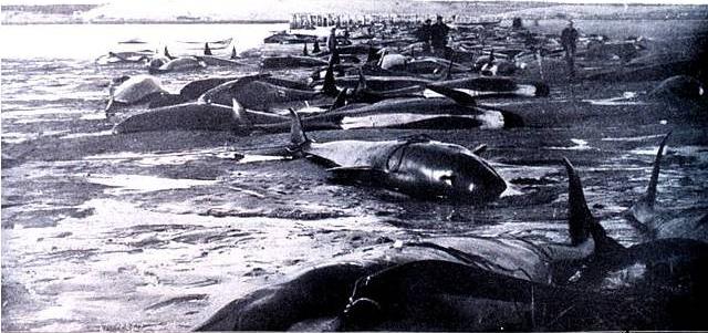 1902-stranding-cropped
