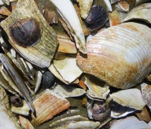 oyster-reef-21-mar-09-003-840