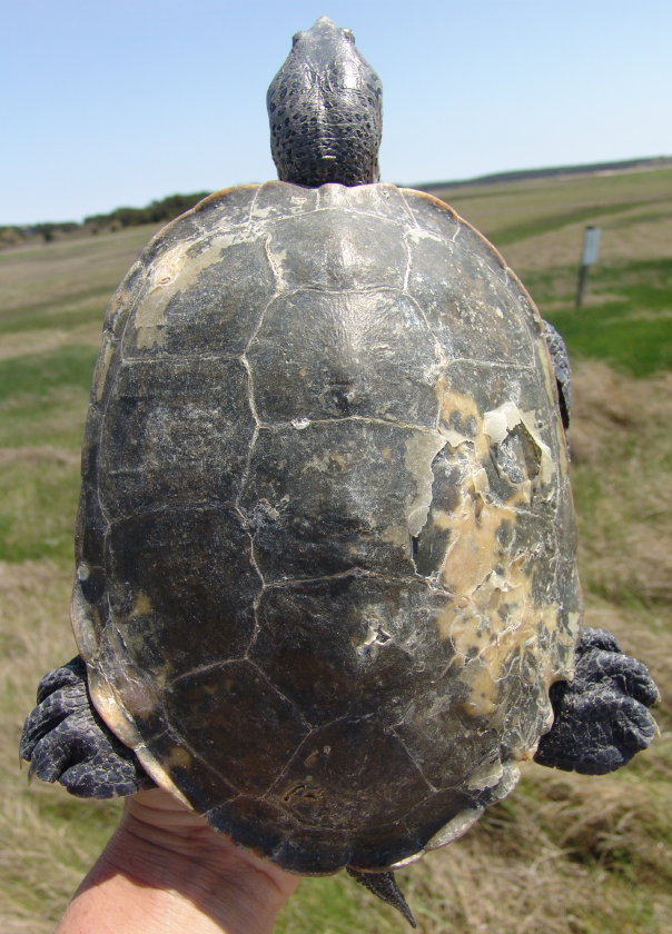 86-carapace-16-may-09-000-840