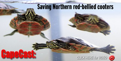 red-tummy-turtle-rehab