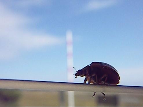 ladybug 001