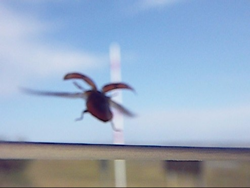 ladybug 011
