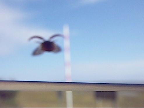 ladybug 012