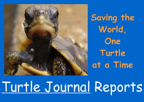 Turtle Journal Reports 480
