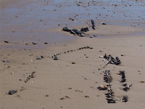 pilot whale bones 6 Mar 10 004 480