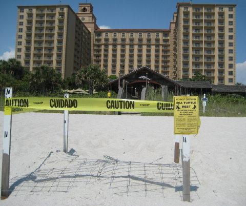 loggerhead nest Ritz Carlton 001 480