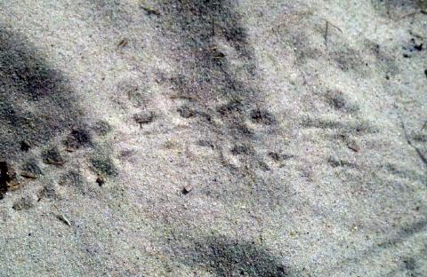 sandy neck tracks 001 480