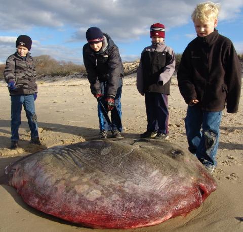 sunfish 11 Nov 08 001 480