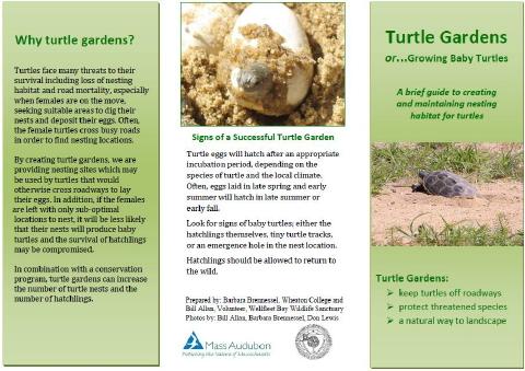 Turtle Garden photo 480