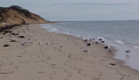 beach 051 480