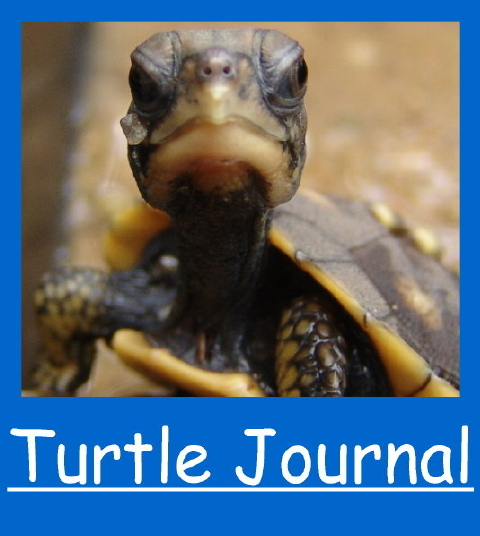 Turtle Journal Twitter 480