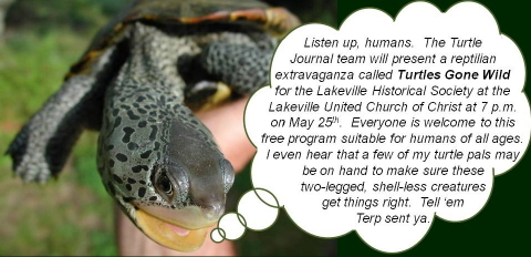 Turtle Speaks Lakeville Historical Society 480