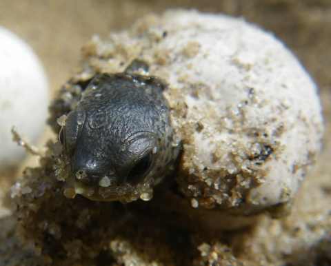 emerging hatchling 004 480